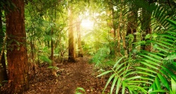Australian-rainforest-at-late-afternoon-800x430