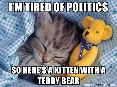 im-tired-of-politics-so-heres-a-kitten-with-a-teddy-bear